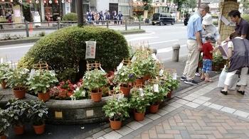 20160724青梅本町朝顔市.jpg